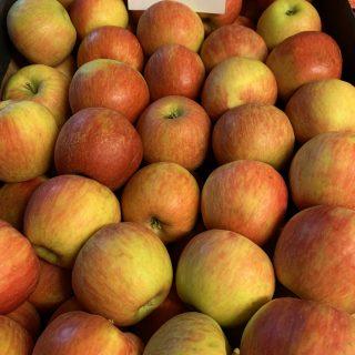 Jabłko miodowe