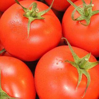 Pomidor zwykły Polski